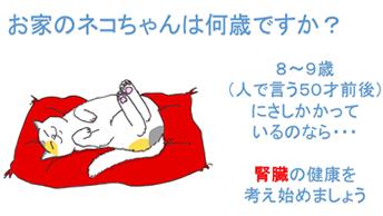 猫が8~9歳近いなら、腎臓の健康を